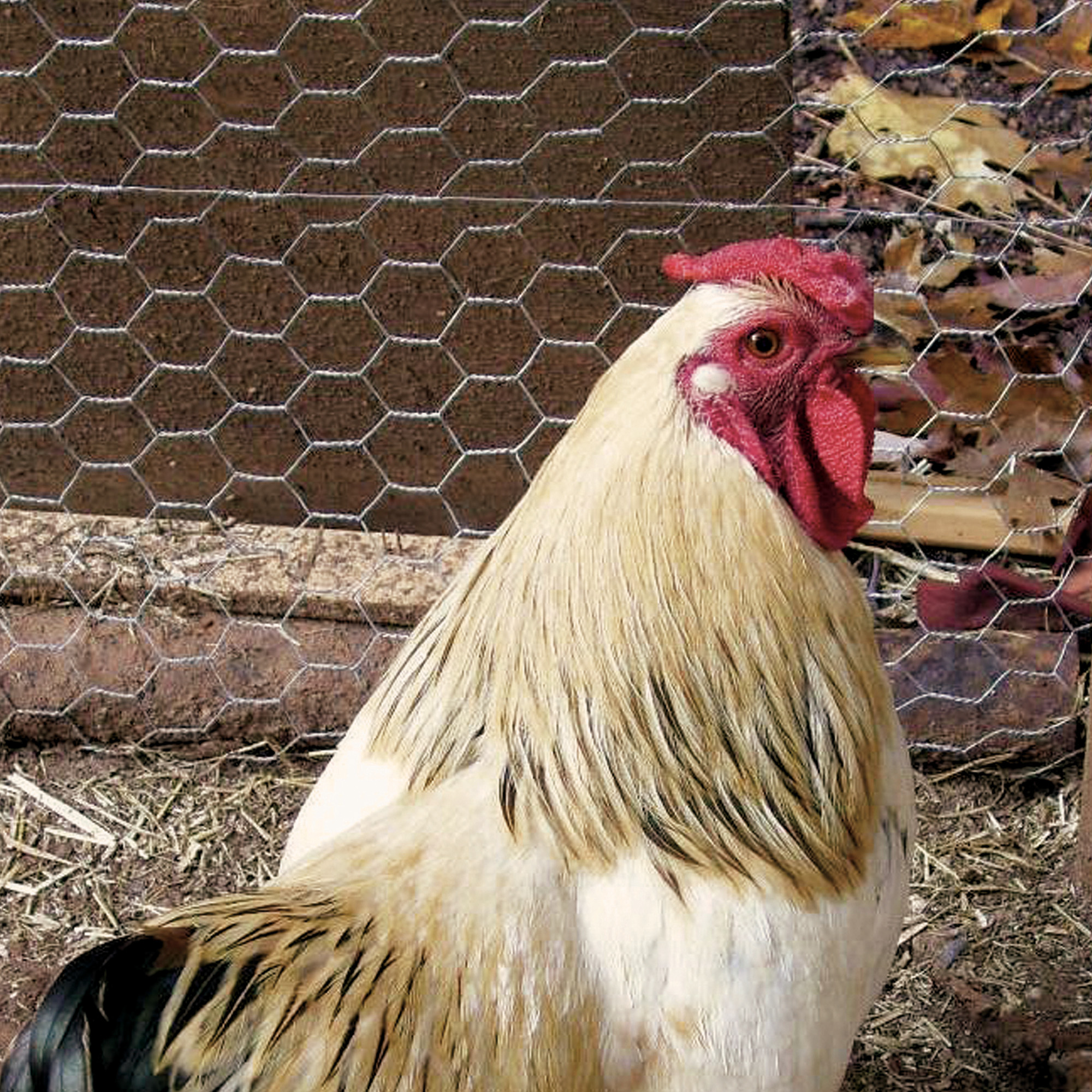 Hexagonal Poultry Netting